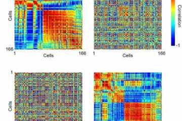 Image shows matrices of the neural activity.