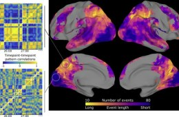Image shows brain scans and event segmental models.