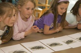 Image shows kids in school.