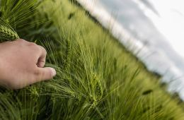 Image shows a person touching grass.