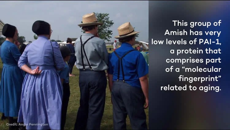 Image shows Amish people.