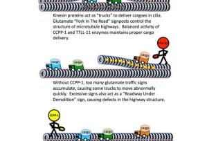 This diagram shows how cellular highways work.