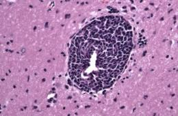 Image shows cells.