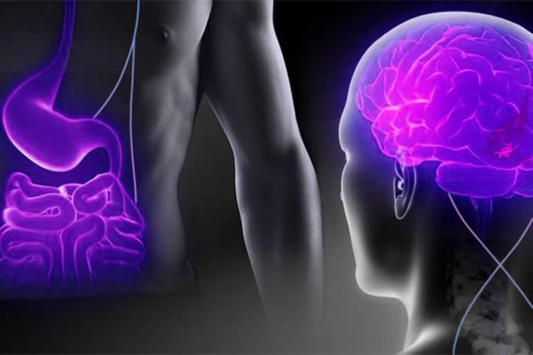 Image shows a brain and gut in purple.