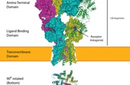 ampa receptor