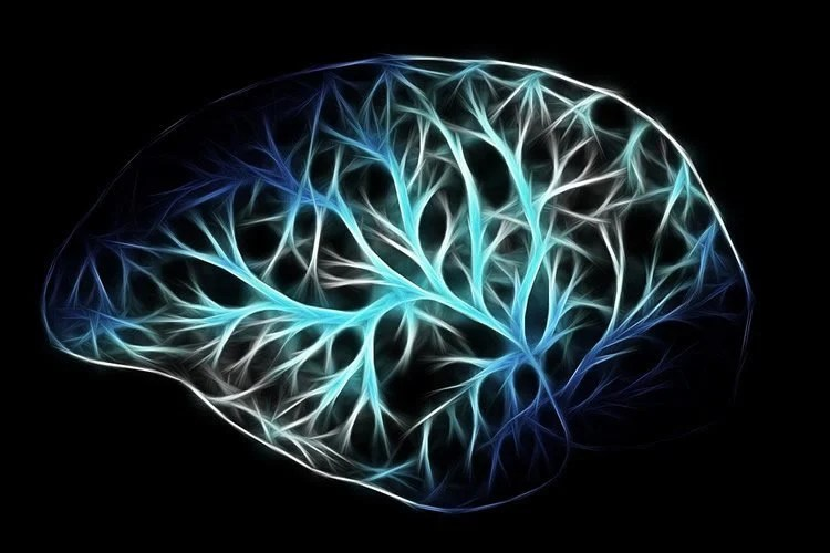 Brain stem cells in adults are