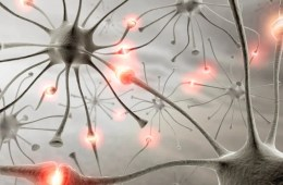 neurons are shown
