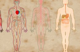 bodies