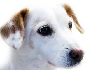 a dog's face