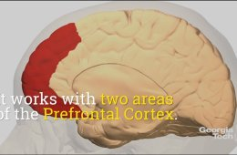 the prefrontal cortex highlighted in the brain