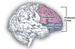 Resilient Dyslexics Have More Gray >> Gray Matter Research Articles Page 2 Of 10 Neuroscience News