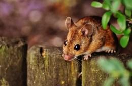 a mouse