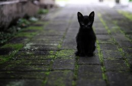 a black kitten sitting on a path