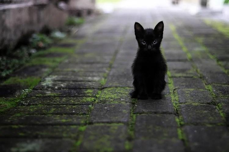 a black kitten sitting on a path