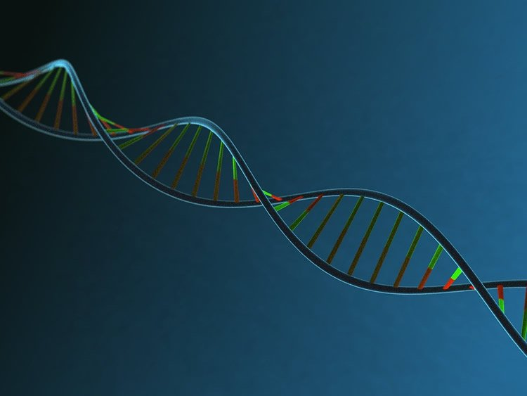 Thousands of DNA Changes in Developing Brain Revealed by Machine Learning