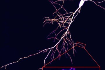 dendrites in the hippocampus