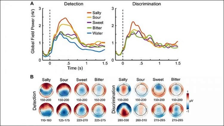 How the Brain Detects, Identifies and Acts on Taste