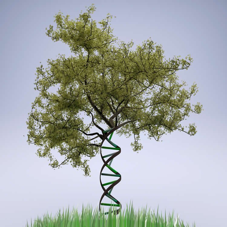 a tree and dna