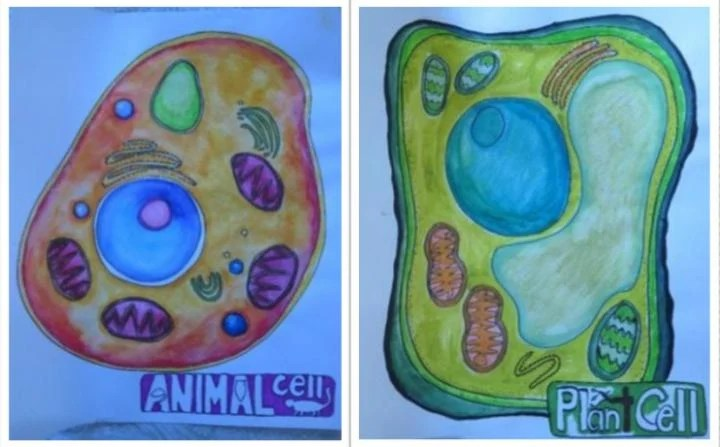 A plant and an animal cell are drawn brightly.