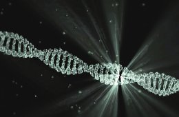 A DNA double helix is shown here