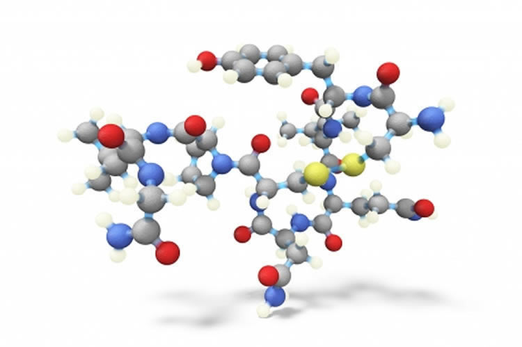Oxytocin could help treat alcohol use disorder: Rat Study