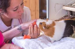 This shows a patient holding a guinea pig