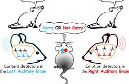 This is a drawing of mice and the brain networks