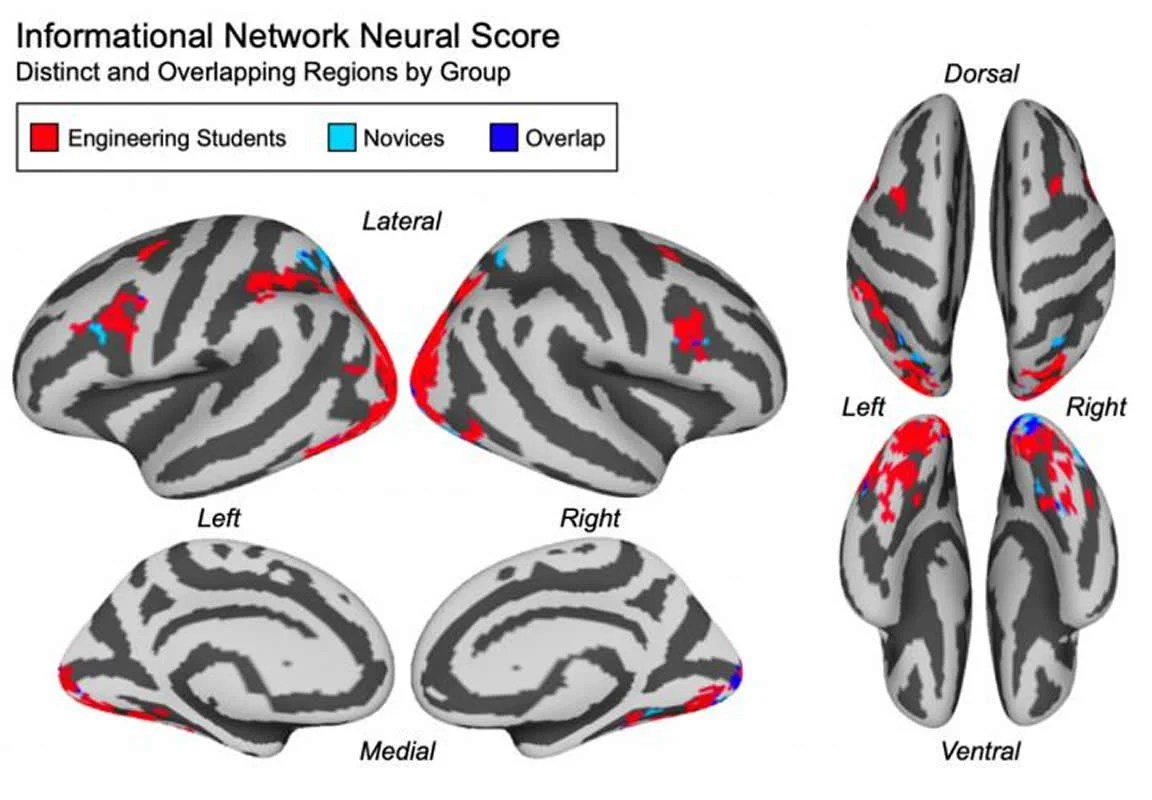 This shows fMRI scans from the study