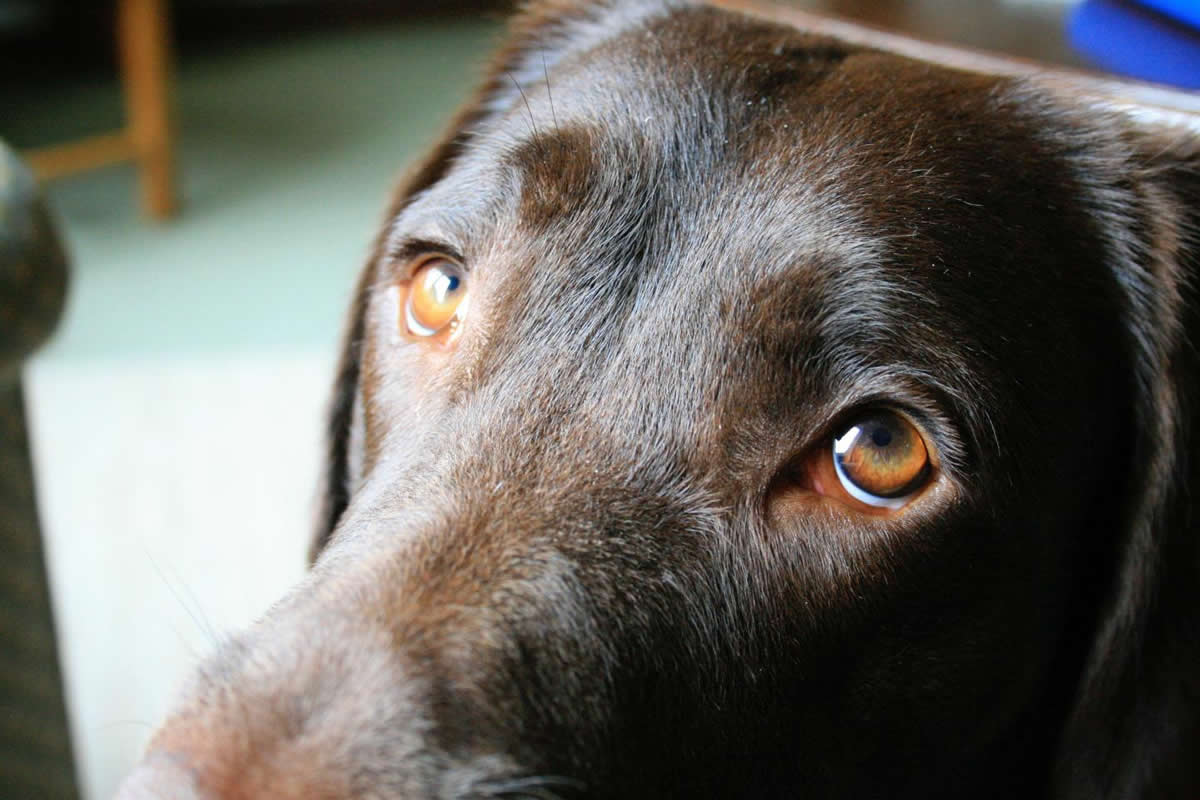 Puppy love: Why puppy dog eyes evolved to benefit communication with