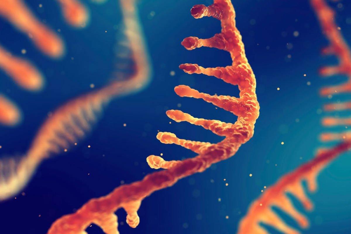 Questo mostra l'RNA