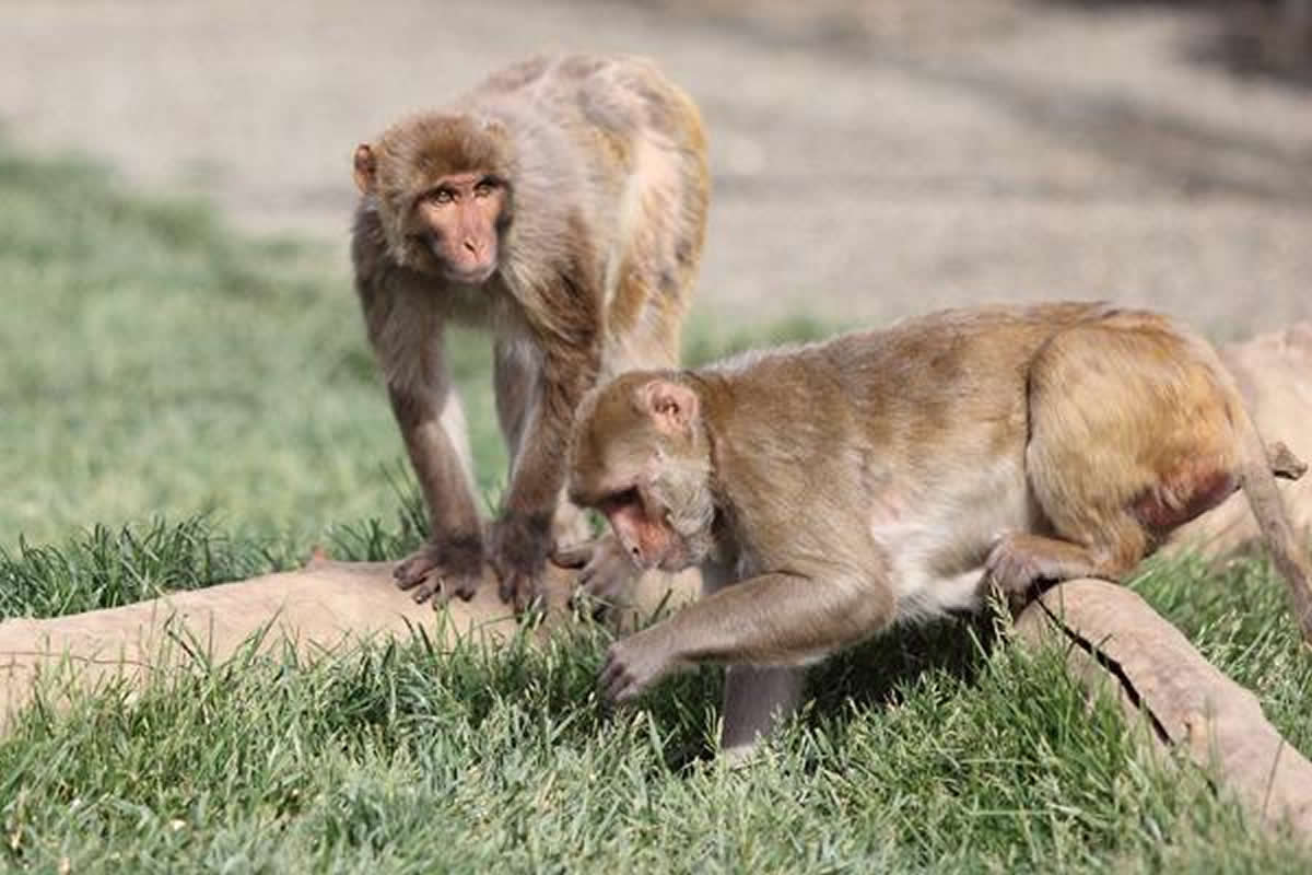 This shows baboons