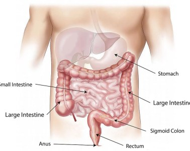 This is a diagram of the gut
