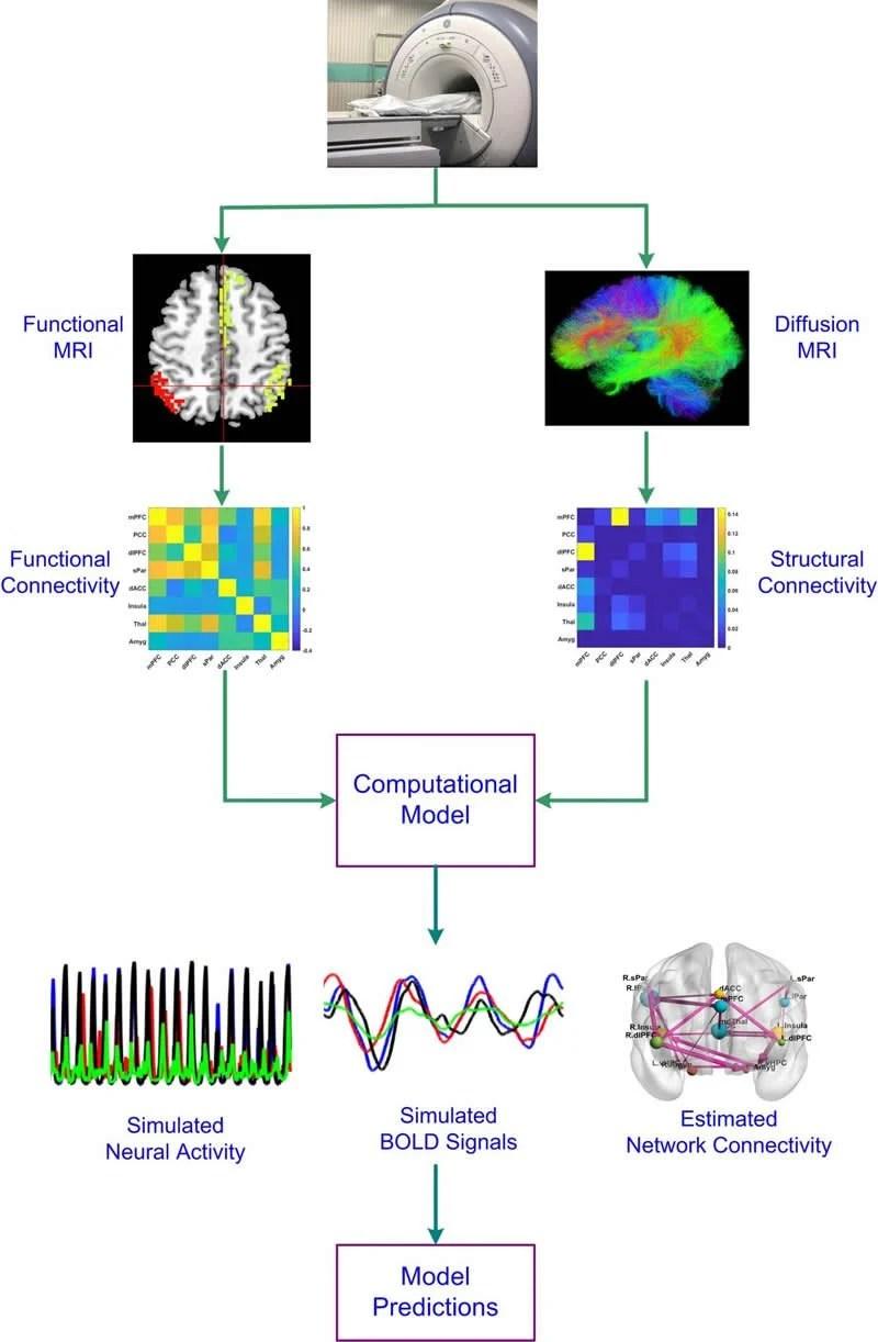 Imaging reveals pathways behind depression - Neuroscience News