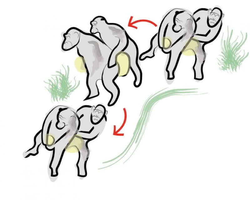 How humans learned to dance; from the Chimpanzee Conga - Neuroscience News