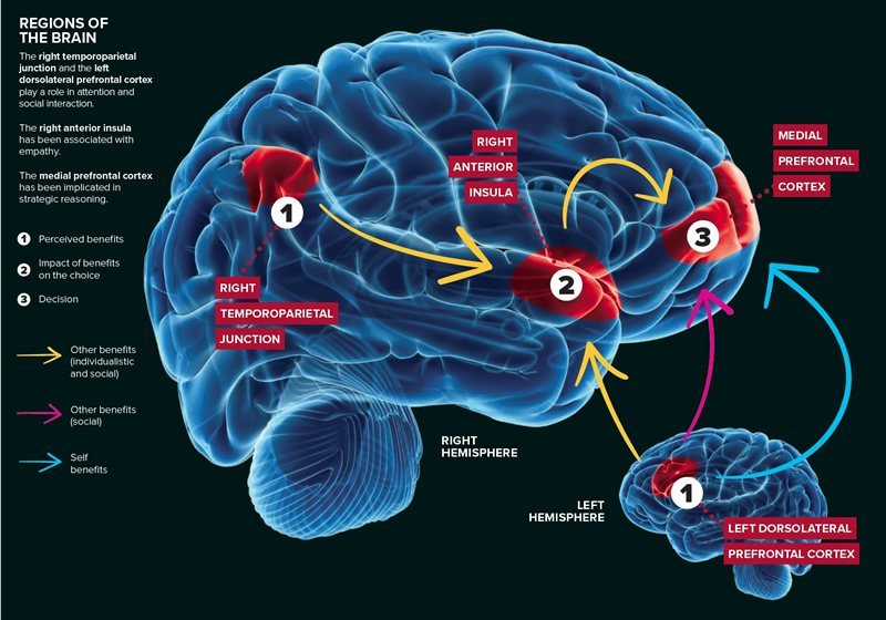 Deepening our understanding of selfish behavior - Neuroscience News