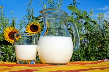 This shows a glass of milk, a milk jug and sun flowers