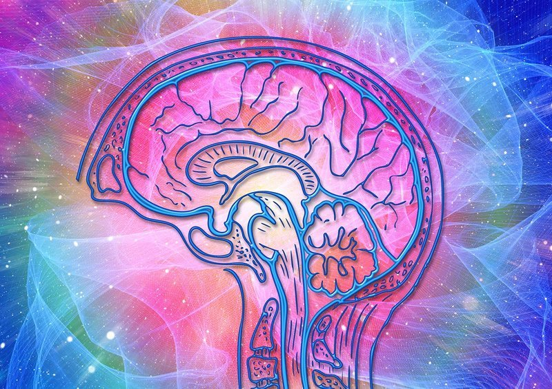 This shows the outline of a brain