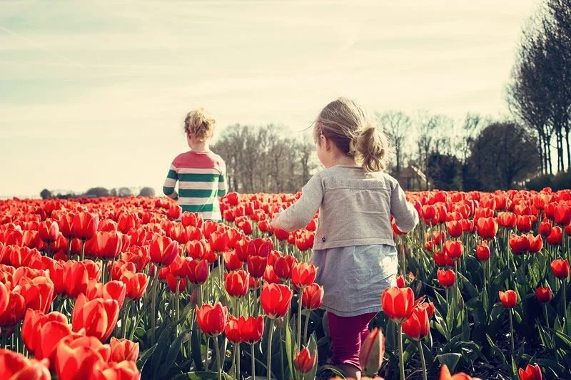 This shows children playing in a tulip field