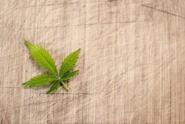 This shows a cannabis leaf
