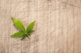 This shows a marijuana leaf