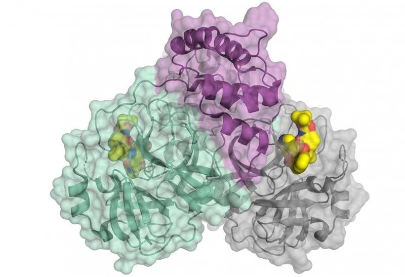 This shows the structure of the protease