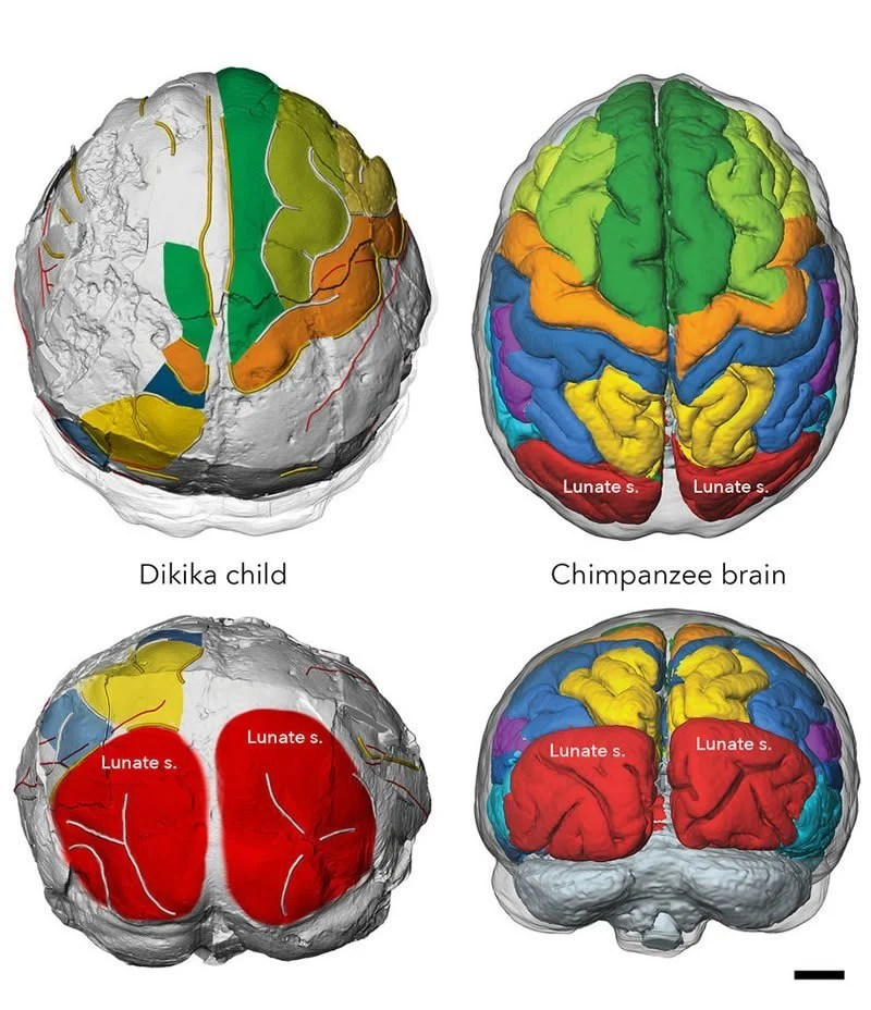 This shows the brain regions