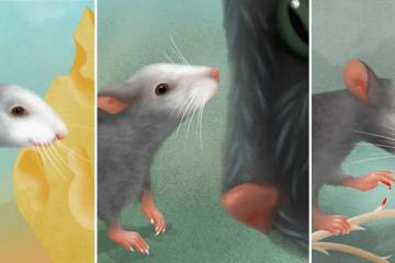 This shows three different facial expression of the mice