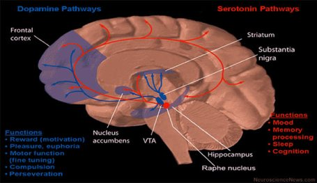 Dopamine and Serotonin Pathways are shown with the Nucleus Accumbens highlighted.