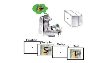 A monkey is shown sitting in front of a computer monitor. An image of a parrot is above the monkey's head and Sample and Text boxes show the parrot. The delay and fixation boxes just show dots.