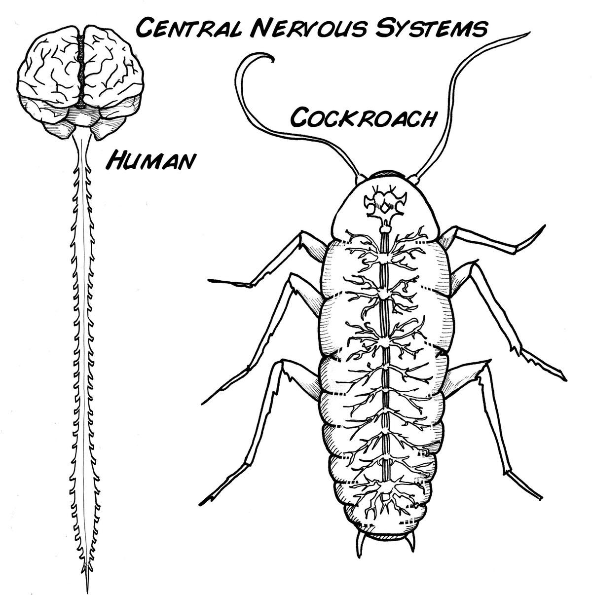 App Para Dirigir El Movimiento De Los Insectos Neurosciencex