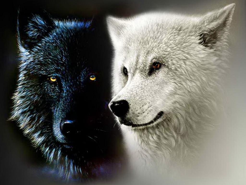 Οι δύο λύκοι – ένας θρύλος των Ινδιάνων Τσερόκι