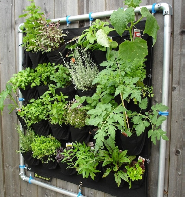 Plant vertically to utilize space in garden - Neutrino Burst