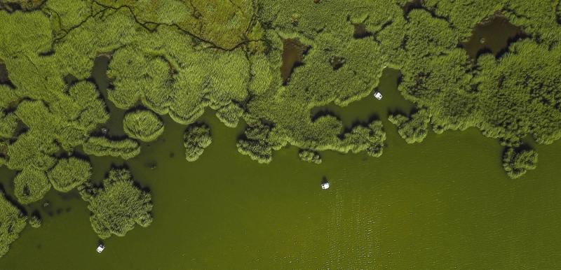 Algae farm