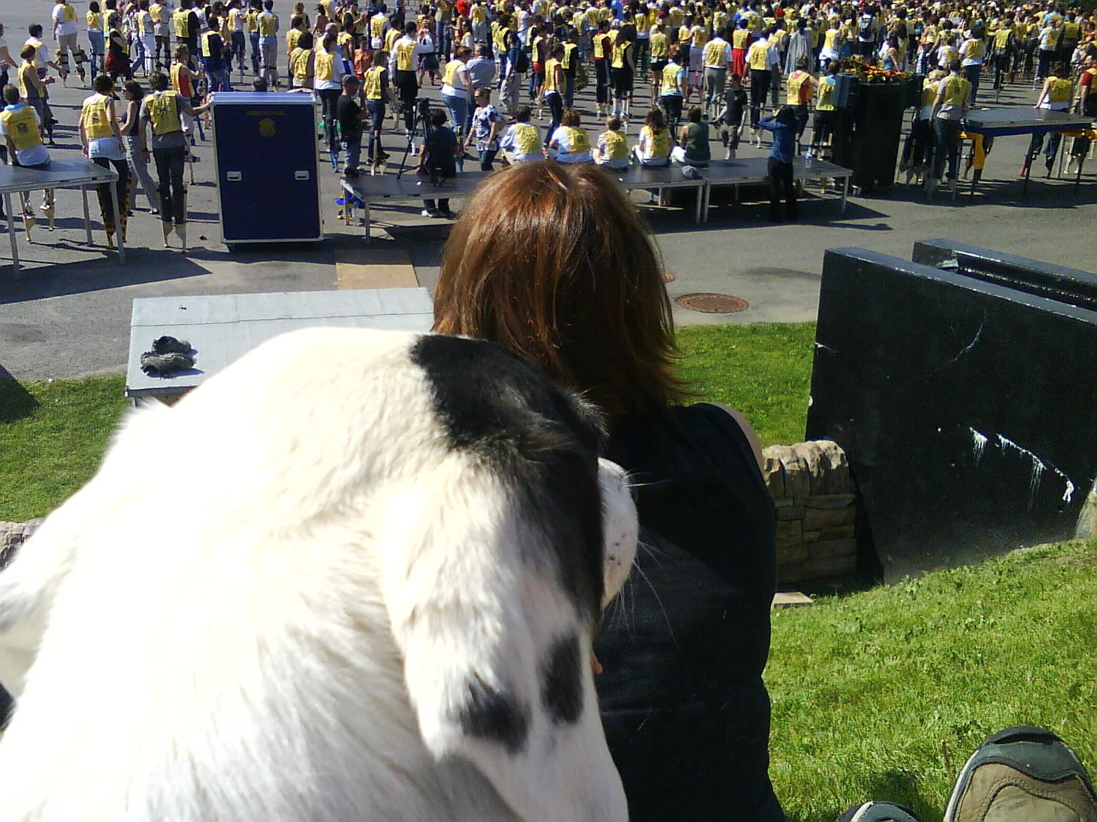 Saku, le seul chien AU MONDE qui a assisté au record Guiness des échasses au siège social international du Cirque du Soleil, 16 juin 2009, Montréal.